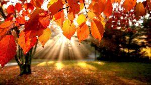 autumn-ball